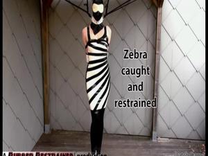 Nongrid_medium_zebra-girl-caught-and-restrained-video