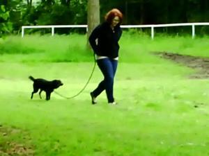 Nongrid_medium_cuffed-walk-with-a-dog